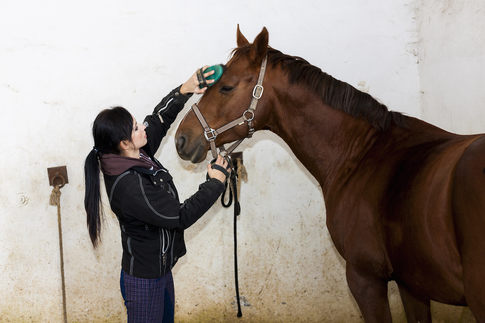 Allergic Equestrian Woman Grooms Horse